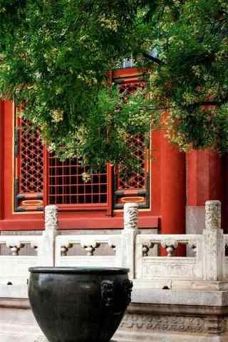 故宮中的桂(gui)花樹(shu)手(shou)機壁紙