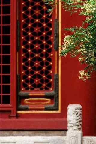 故宫中的桂花手机壁纸