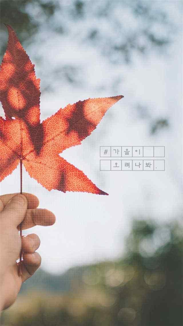 秋分节气之美丽枫叶手机壁纸