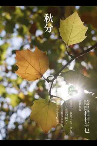 秋分节气之树叶图