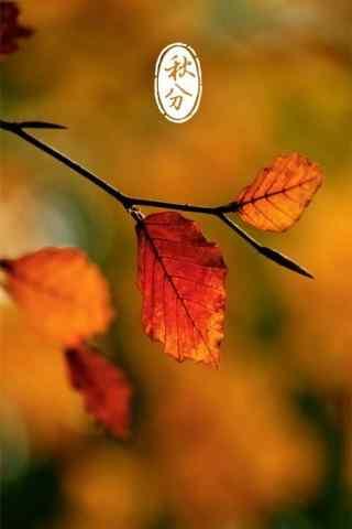 秋分节气之秋日枯叶手机壁纸