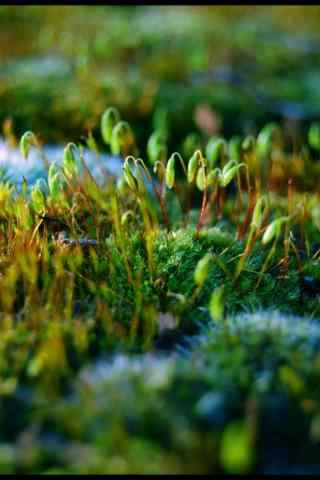 小清新绿色植物手机壁纸