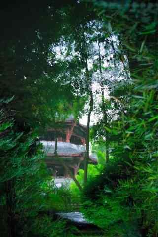 小清新竹子护眼手机壁纸