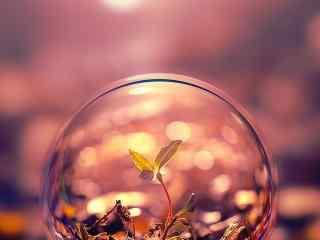水晶球植物壁纸唯