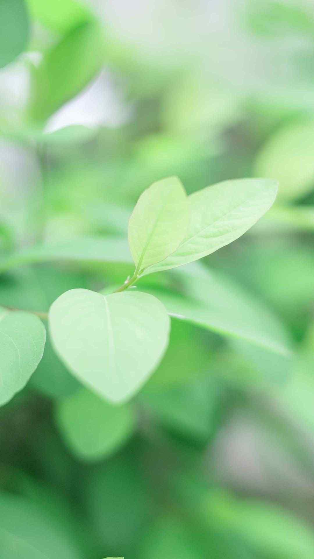 植物绿色小清新手