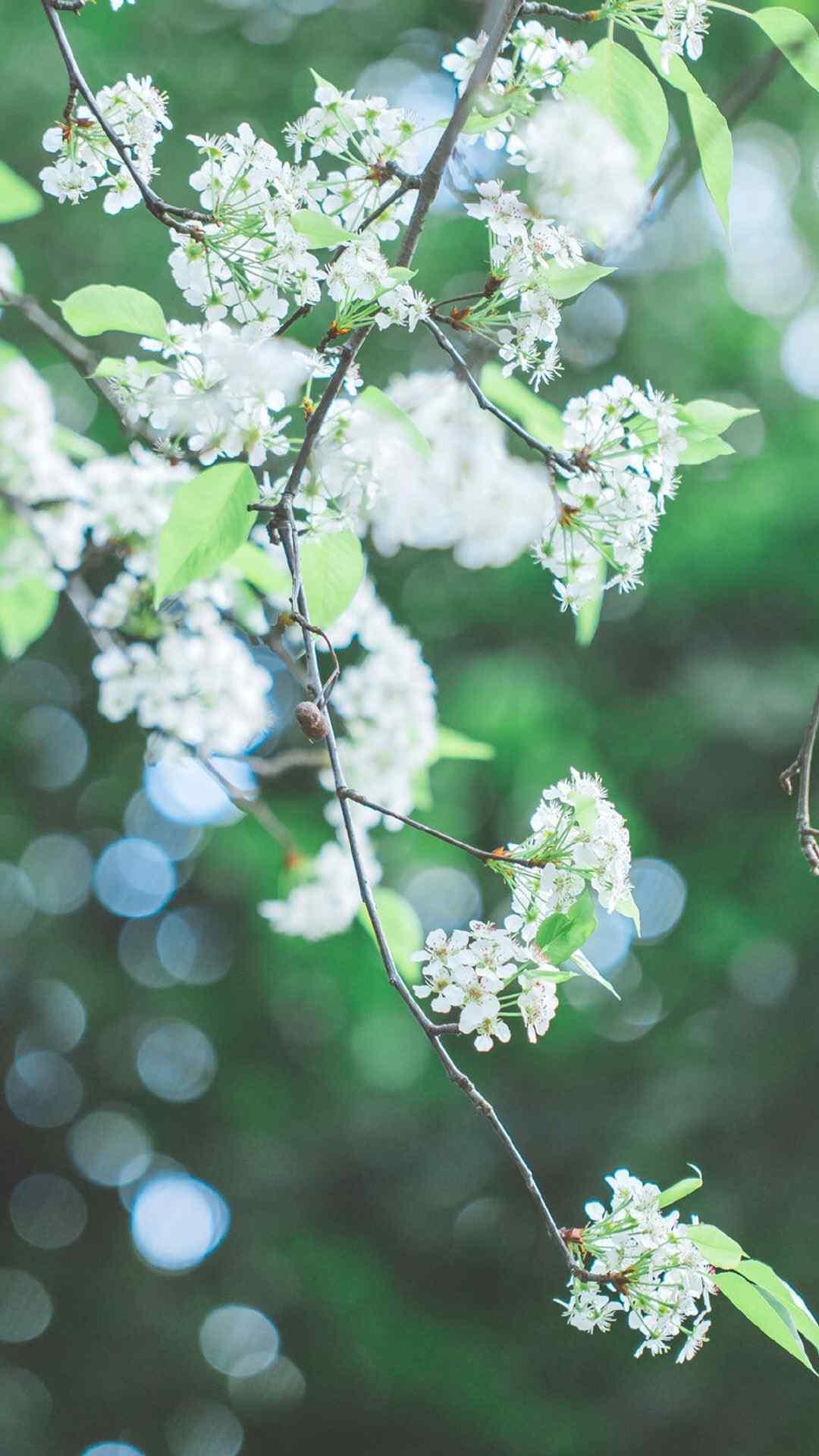 小清新花卉微距摄