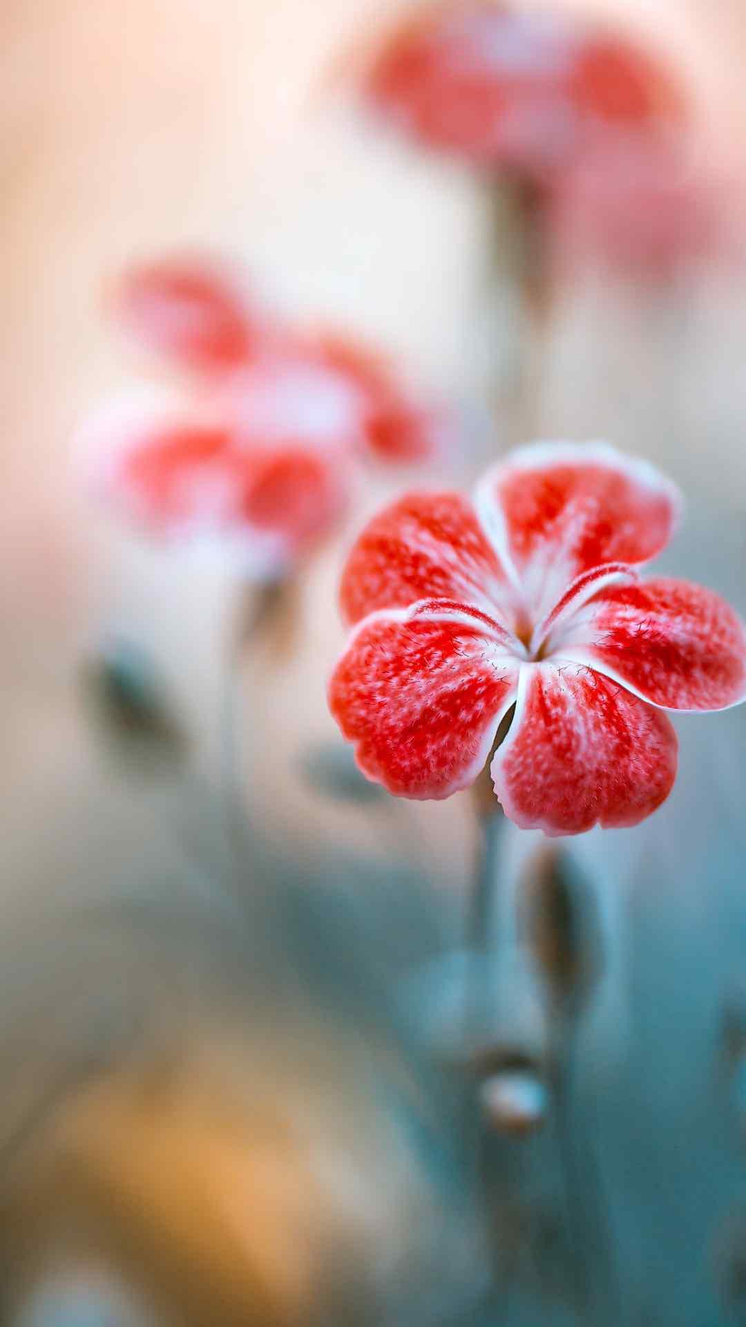 治愈系唯美花卉植