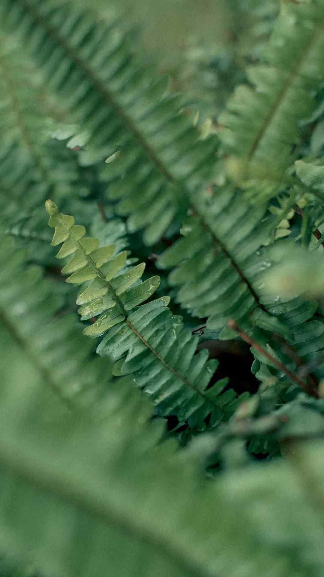 植物清新护眼绿色