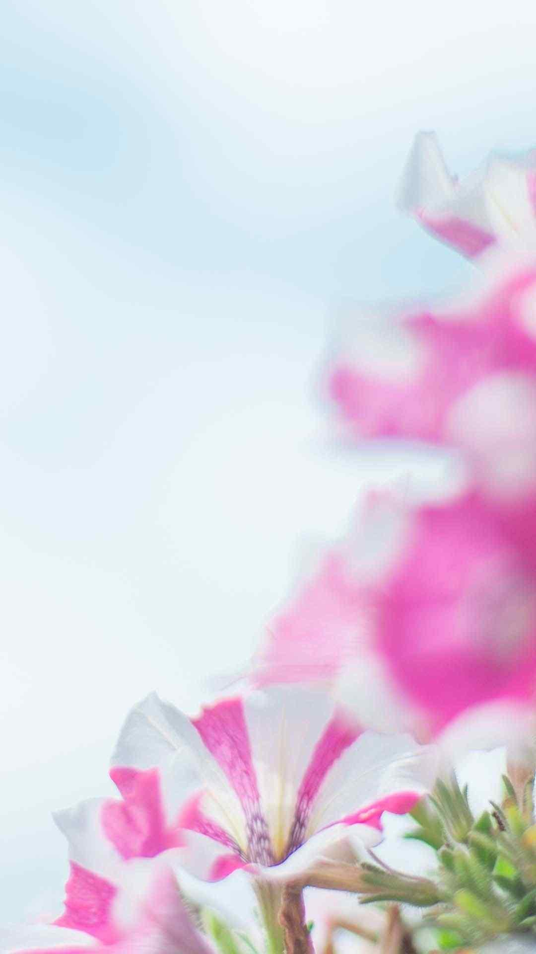 小清新花卉唯美高