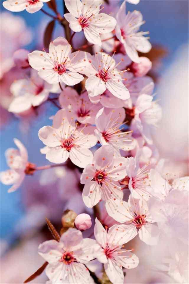 娇艳盛开的唯美花