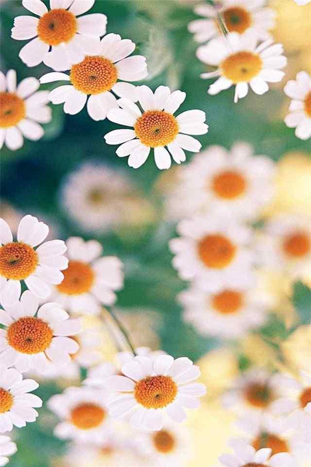唯美小清新花卉精