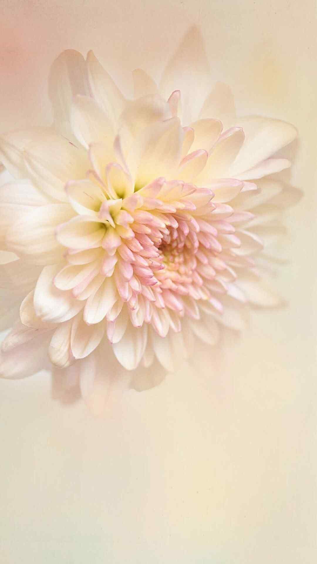 静态唯美花朵植物