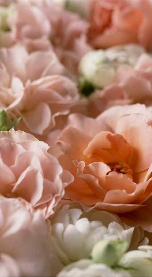 浪漫粉色唯美茉莉