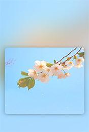 iPhone8清新植物自然手机壁纸
