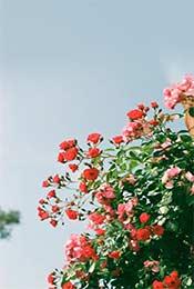 精选风景植物清新