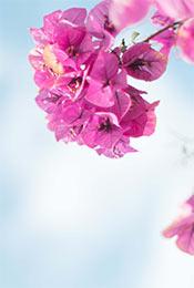 紫色花卉高清写真手机壁纸