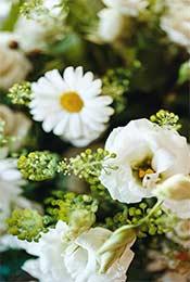 小清新植物花卉高清手机壁纸