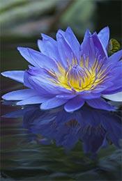 清新养眼植物花卉