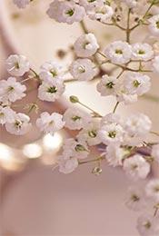 清新护眼植物花卉手机壁纸