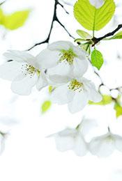 小清新花卉植物唯美高清手机壁纸