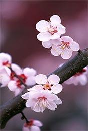 清新养眼夏季花卉
