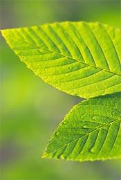 清新护眼植物手机背景壁纸
