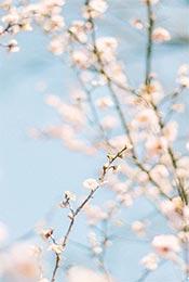 白色唯美花卉植物手机壁纸