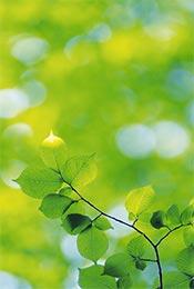 清新护眼绿色植物手机壁纸