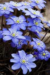 清新可爱紫色小花