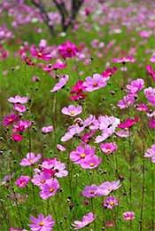 唯美养眼植物花卉