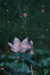 梦幻花卉唯美植物手机壁纸