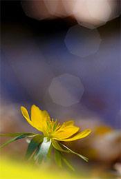 唯美植物花卉高清