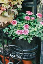 绿色唯美盆栽植物高清手机壁纸