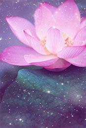 梦幻荷花植物唯美手机壁纸