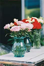 清新植物盆栽唯美花卉高清手机壁纸