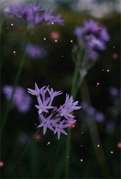 紫色唯美花卉植物手机壁纸