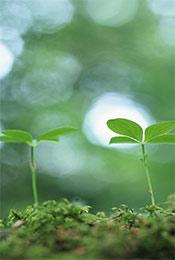 清新绿色植物嫩芽手机壁纸