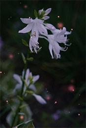 唯美梦幻森林植物高清手机壁纸
