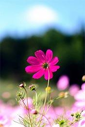 唯美植物花卉图片