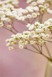 精选清新护眼小花植物高清手机壁纸