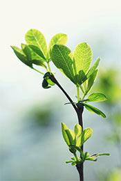 小清新唯美绿色护眼植物手机壁纸