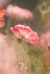 唯美花卉图片高清