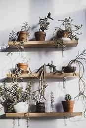 书架上的室内盆栽