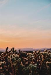 日落时沙漠中的仙