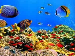 奇妙的海底世界动