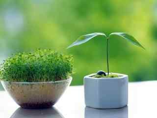 清新绿色植物动态