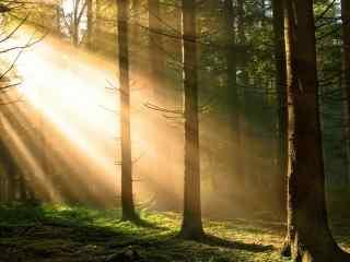 唯美的森林曙光风