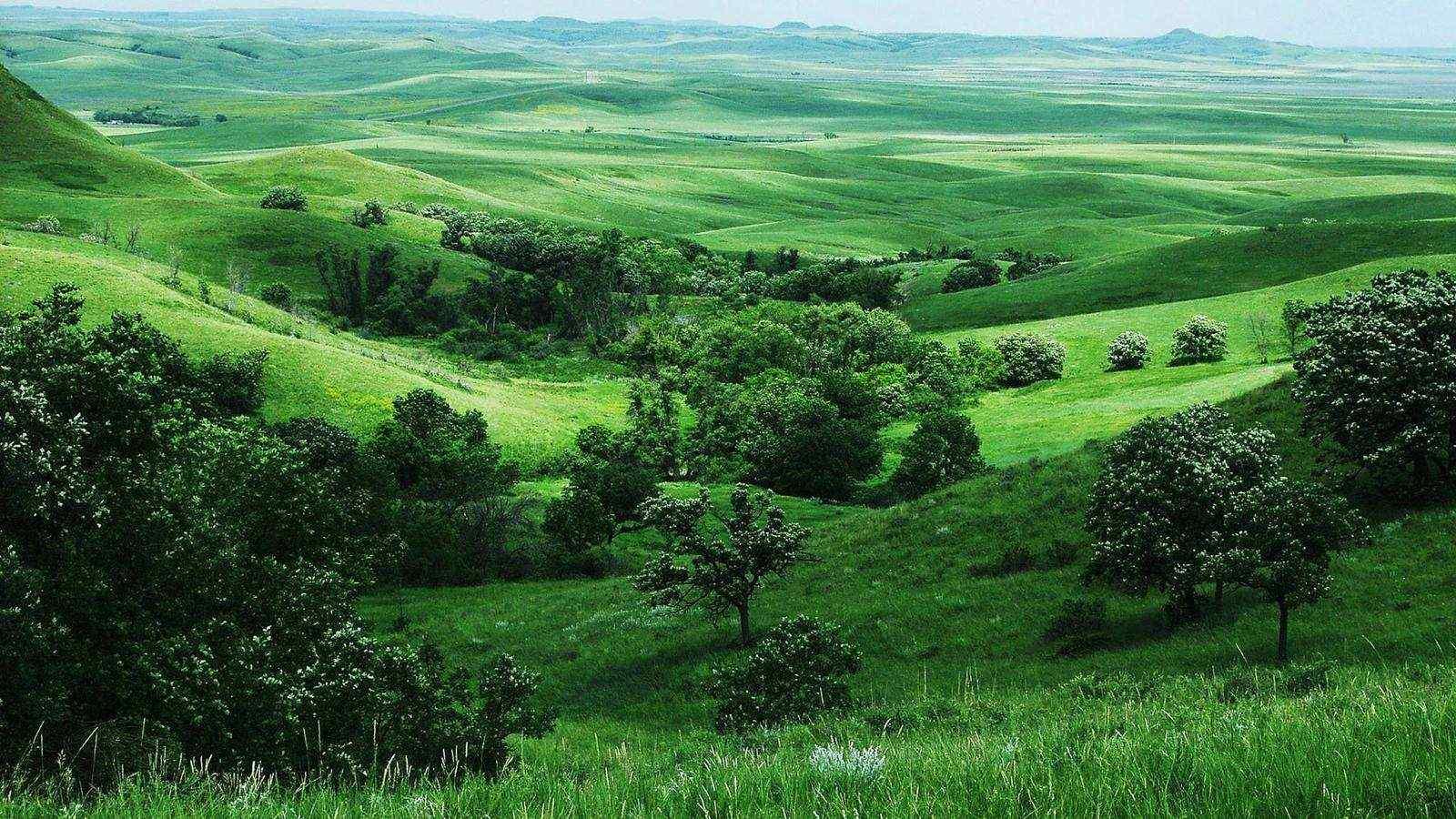绿色清新大草原风景屏保