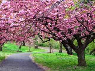 唯美的桃花林动态