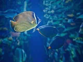 唯美海底世界动态屏保